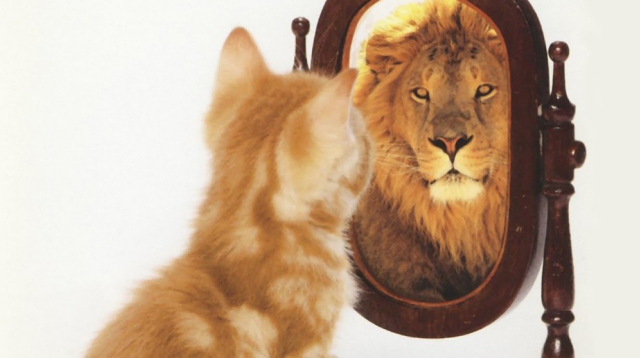 Lion-Reflection-in-Mirror