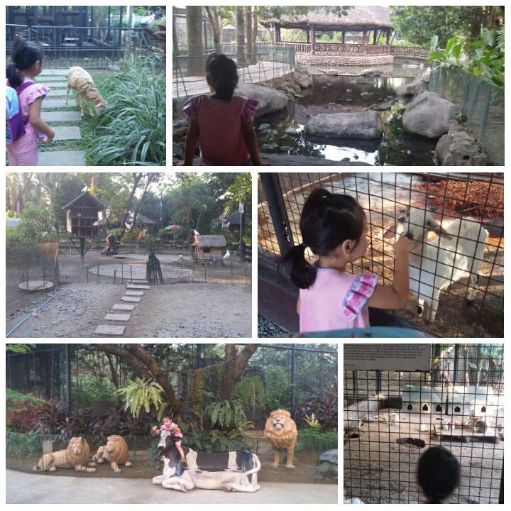 Rainforest-pasig-zoo.jpg